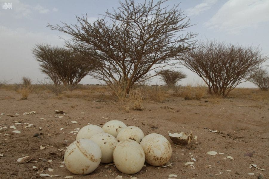 IN PICTURES: Never-before-seen glimpse into natural reserves across Saudi Arabia