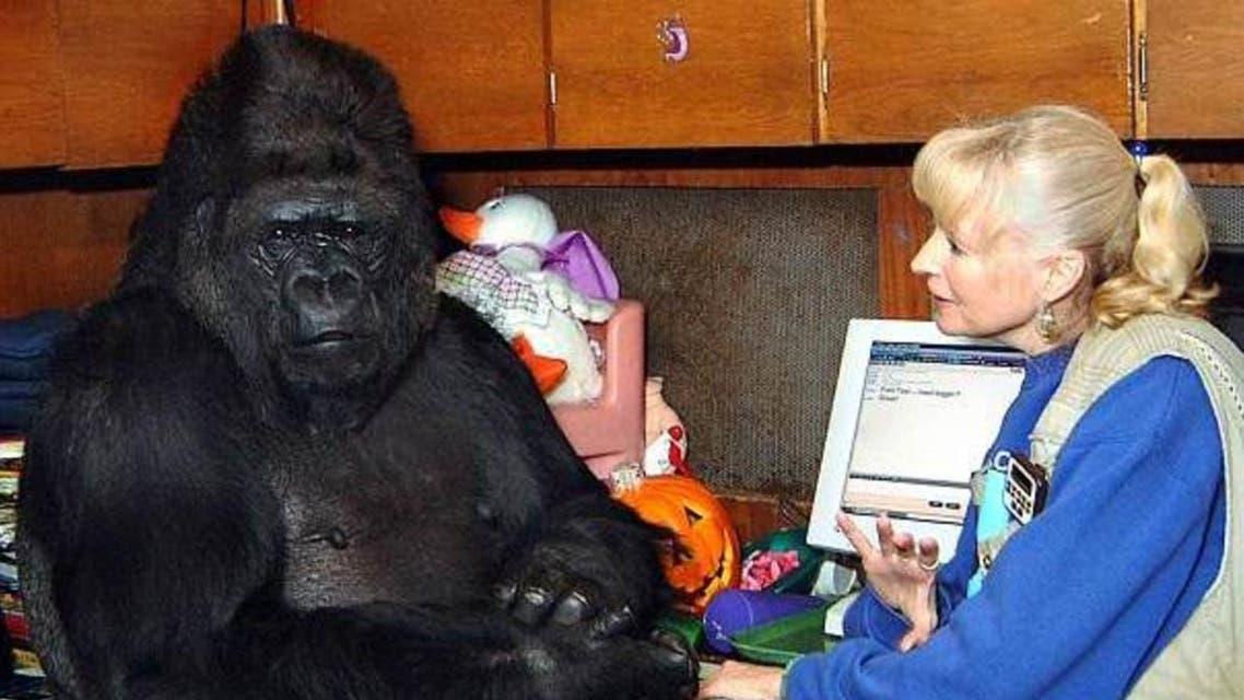 gorilla koko (screengrab)