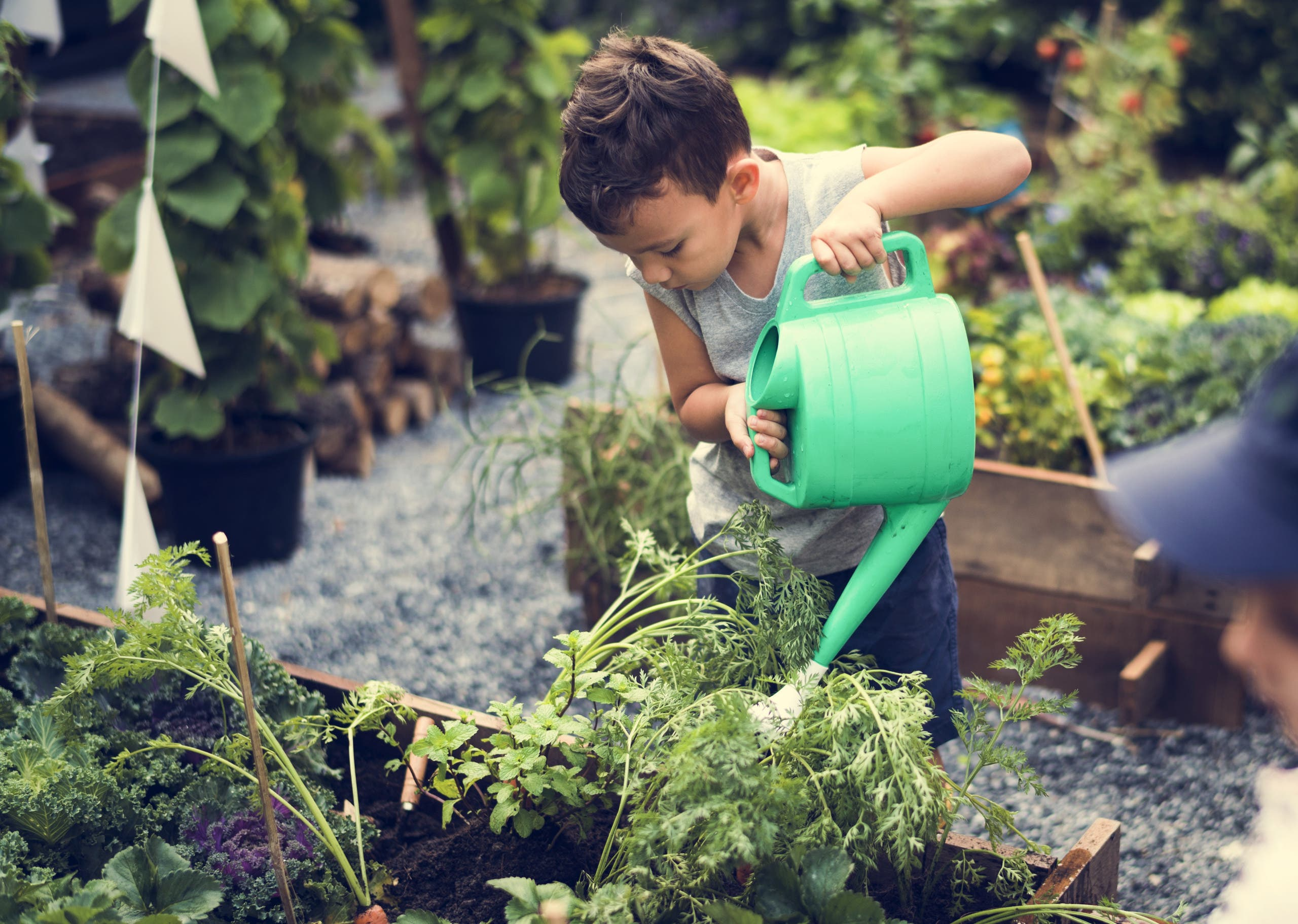 Children are in the garden watering the plants. (Shutterstock)