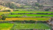 IN PICTURES: Saudi Arabia's Asir region houses terraced farm fields