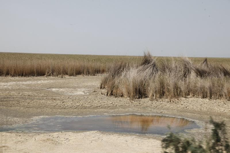 Refusal to meet the water needs of various cities in Arabistan has caused the drought of marshlands. (Supplied)