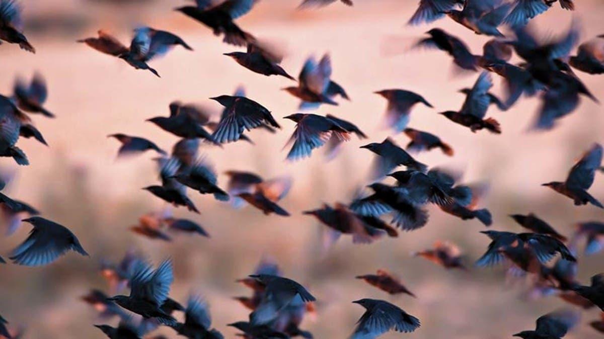 الطيور أنواعها ومعانيها