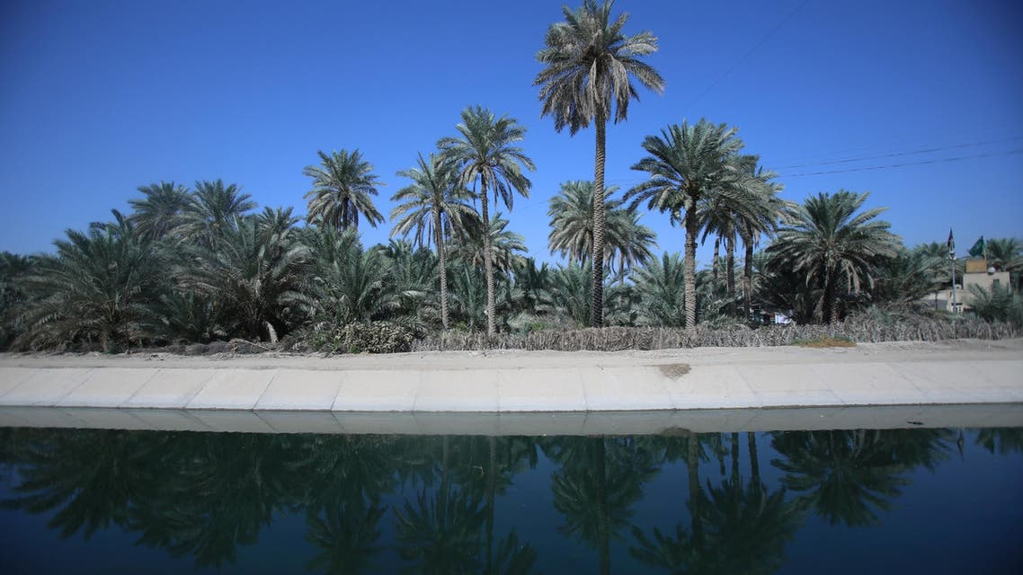 Date palm trees at a farm in Karbala on October 14, 2017. (Reuters)