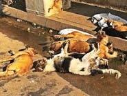 لبنان.. مجزرة كلاب مسممة داخل مزرعة في طرابلس