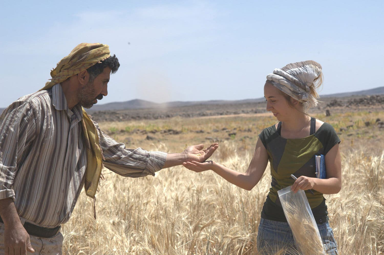 Amaia Arranz-Otaegui, a University of Copenhagen postdoctoral researcher in archaeobotany, and Ali Shakaiteer, a local assistant to researchers working at an archeological site in the Black Desert in northeastern Jordan, collecting wheat. (Reuters)