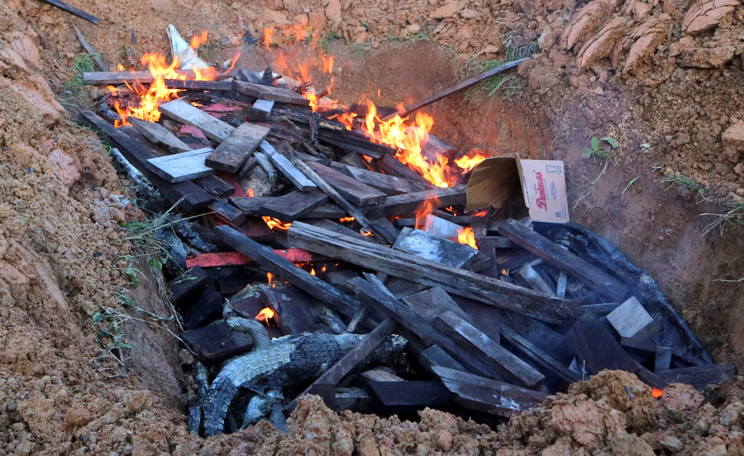 Some of the hundreds of crocodiles, killed by angry locals after a man was killed in a crocodile attack, are burned by government authorities in Sorong regency, West Papua, Indonesia, July 16, 2018. (Reuters)