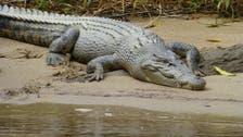 Indonesian authorities burn carcasses of hundreds of crocodiles