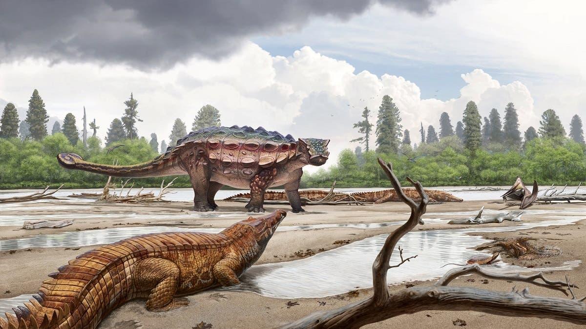 Utah dinosaur Akainacephalus johnsoni 1 (Reuters)