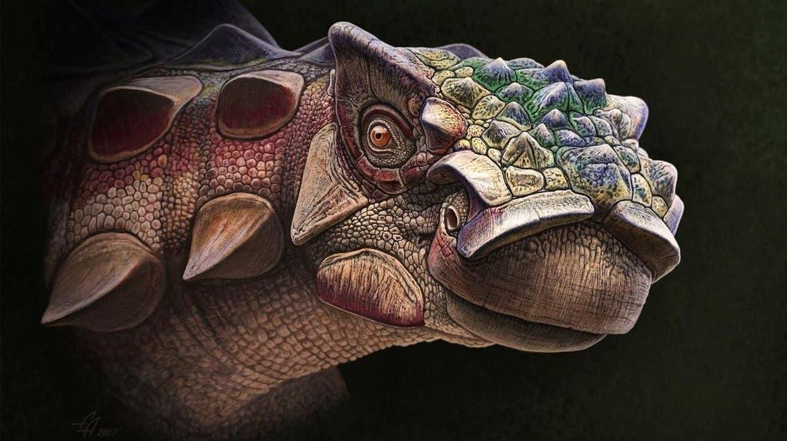 Utah dinosaur Akainacephalus johnsoni 2 (Reuters)