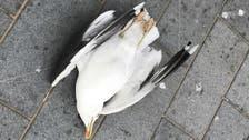 برطانوی پولیس پرندے کو ہلاک کرنے والے شخص کی تلاش میں