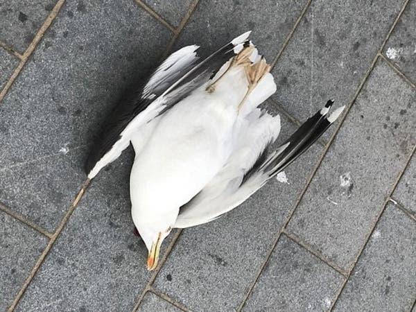 الشرطة البريطانية تبحث عن قاتل طائر سرق بطاطا مقلية