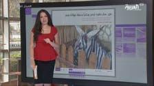 """العربية.نت اليوم.. حمار """"مزور"""" بمصر وقصة سعوديات غواصات"""
