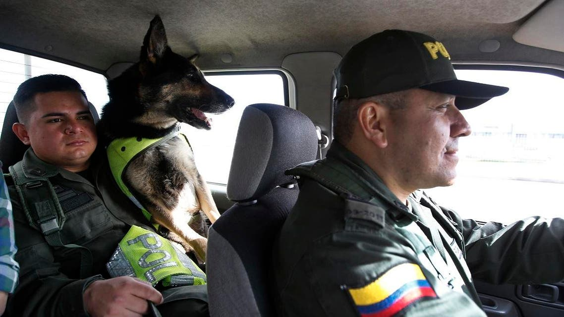 Drug dog Sombra rides with her handler, officer Jose Rojas, to the cargo hold at the El Dorado airport in Bogota, Colombia, Thursday, July 26, 2018. After learning there was a price on Sombra's head, Colombia's national police director ordered her to be transferred to a new post earlier this year, according to local news reports. Colombian police recently revealed that the Gulf Clan, a cartel that boasts its own guerrilla army, has offered a reward of $7,000 to whoever kills or captures the savvy hound. (AP)