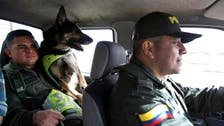Sombra a drug dog gets police protection with $70,000 bounty on her head