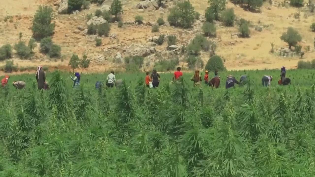 المزارعون يتطلعون لزراعة الحشيش في لبنان