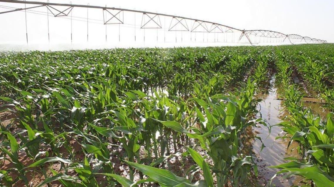 زراعة الجوف الزراعية