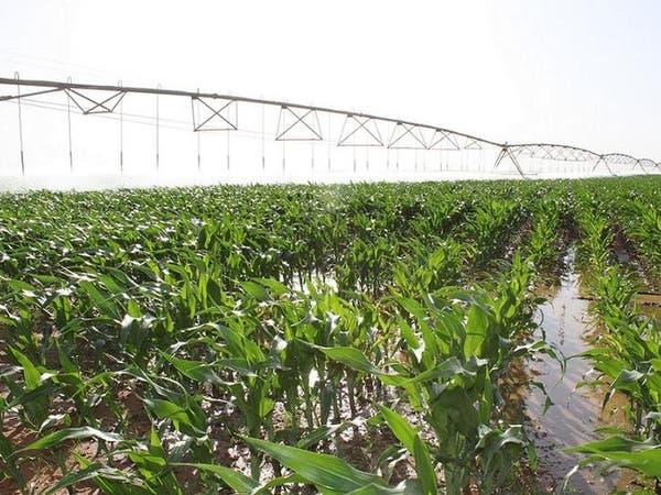 الجوف الزراعية: زيادة مصروفات الزكاة 144%