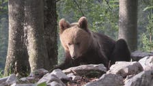 Slovenians strive to live in peace with bears