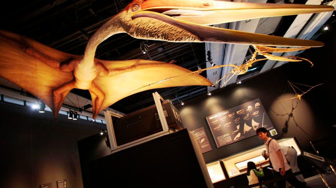 Pterosaur dinosaur. (AP)