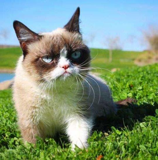 القط ميمي