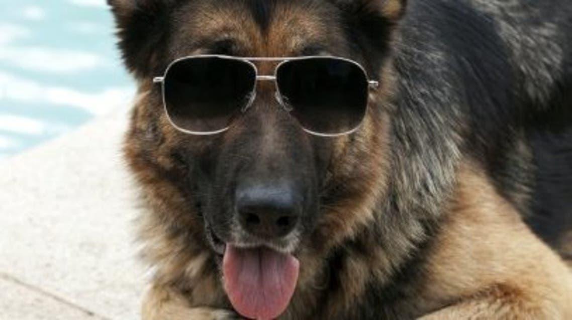 Gunther-IV-german-Shepherd-richest-animal4