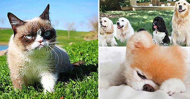 الكلاب الأميركية سادي وسيني ولورين وليكي