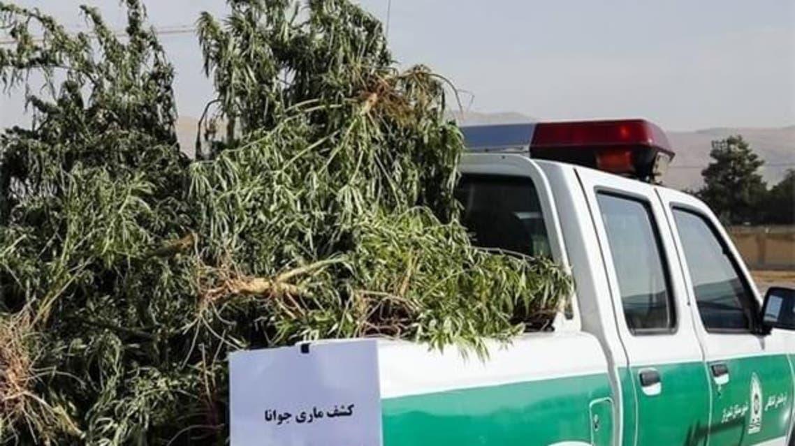 کاشت ماریجوانا در ایران با وام کمیته امداد