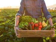 هذا ما يسببه نقص القيمة الغذائية للمزروعات لجسمك