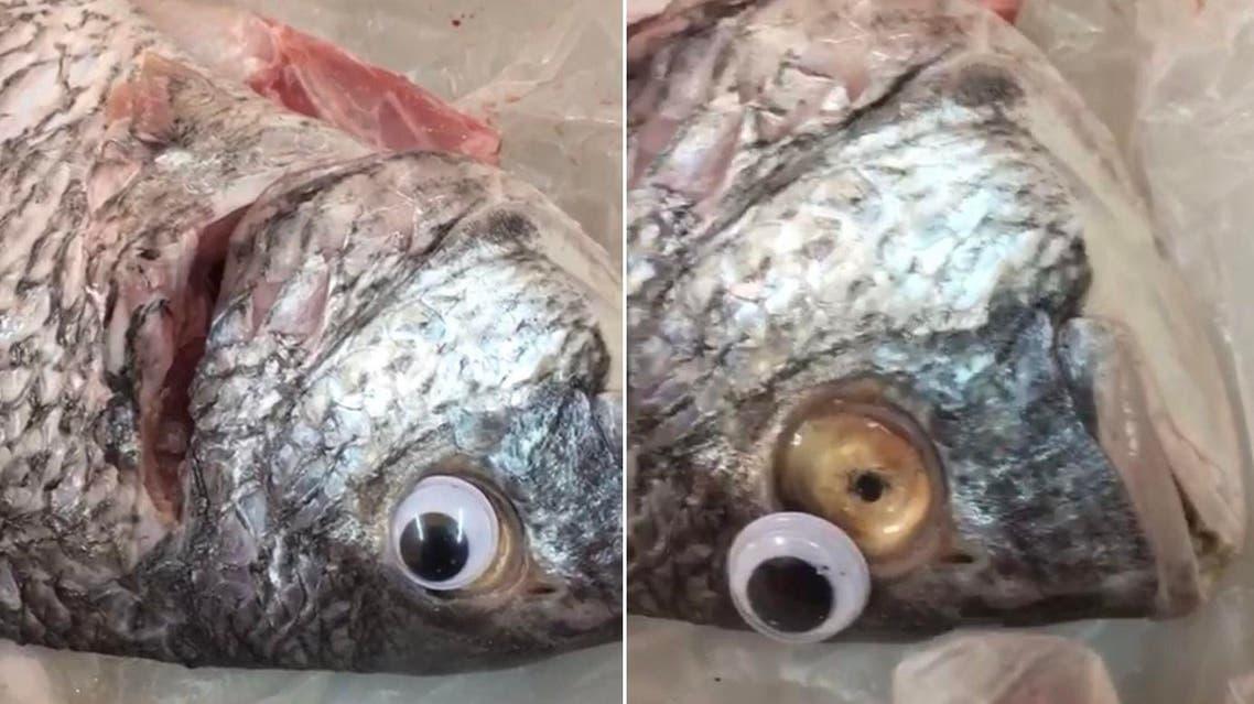 kuwait fish