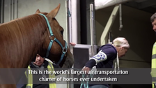 Horses on a plane: How 500 stallions are transported for the Equestrian Games