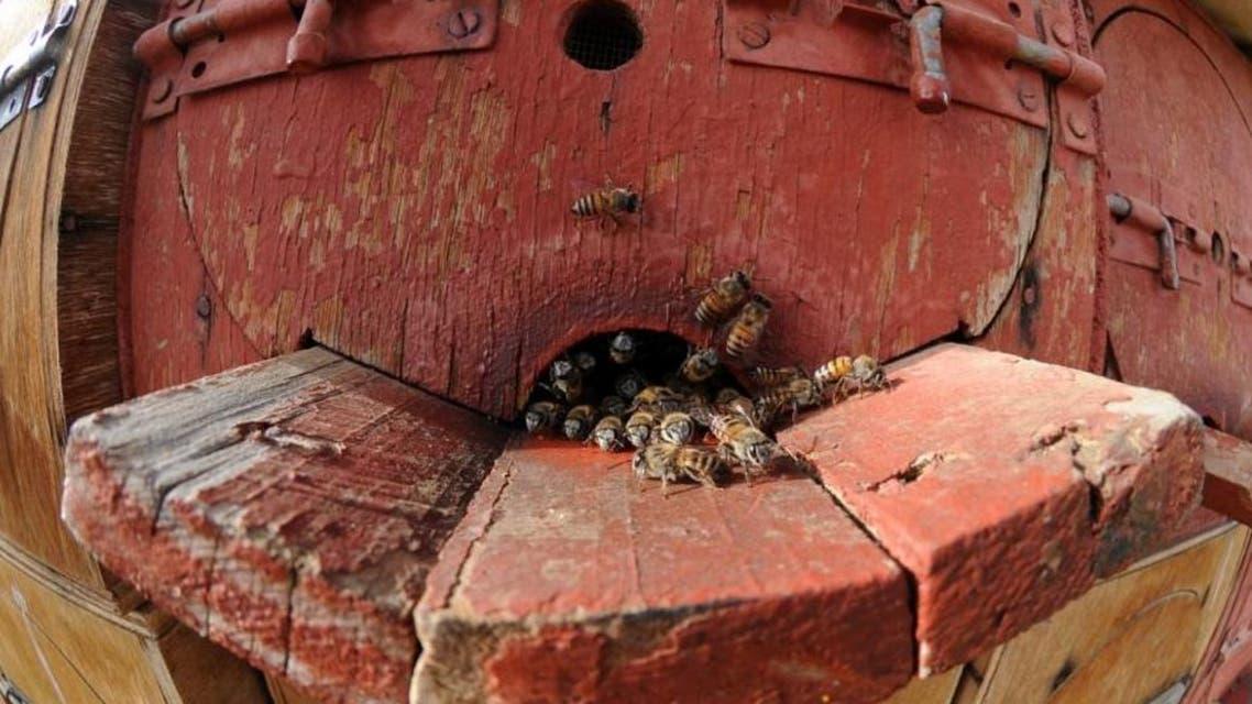 saudi honey bees