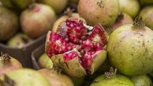 IN PICTURES: The Saudi farms that produce 30,000 tons of pomegranate a year