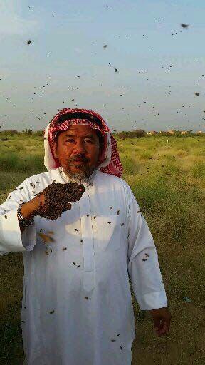 Saudi bee fattani 6 (Supplied)