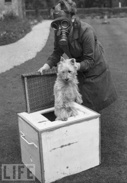 صورة لإمرأة بريطانية وهو بصدد وضع كلبها داخل إحدى العلب خوفا من هجوم كيمياوي ألماني