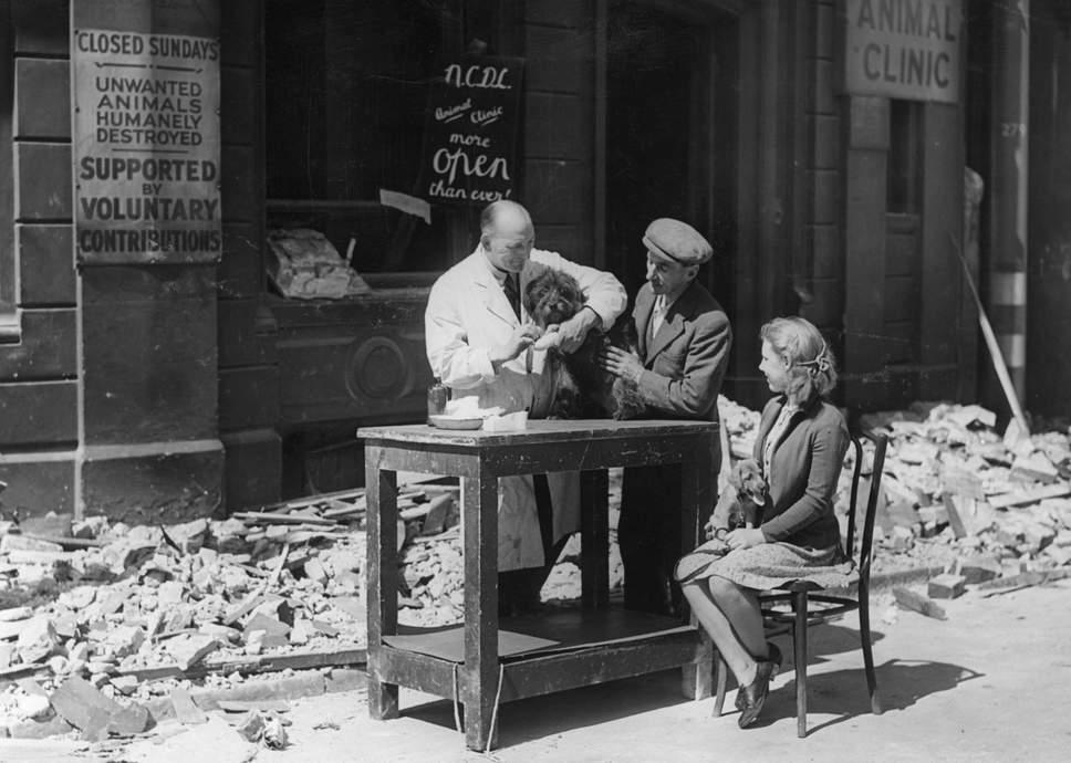 صورة لطبيب بيطري بريطاني وهو بصدد علاج كلب مريض أواخر الحرب العالمية الثانية