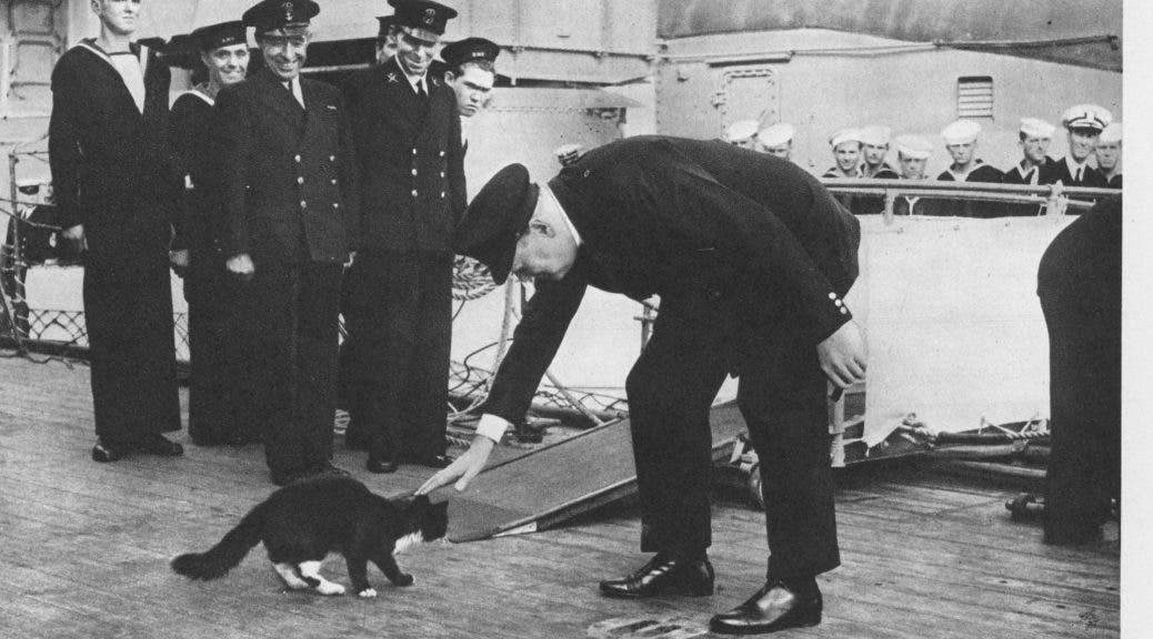 صورة لرئيس الوزراء البريطاني ونستون تشرشل وهو يربت على رأس أحد القطط