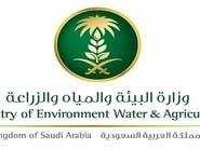 البيئة السعودية: فحص الأغنام الواردة لمكة استعداداً للحج