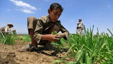 UN warns of worsening Yemen famine threat as Houthis loot resources