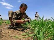 تحذير أممي من المجاعة باليمن.. والحوثي ينهب الموارد