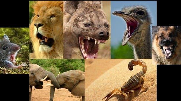 الحيوان الذي لا يصدر صوت