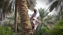 IN PICTURES: A day in the life of an Ahsaa Oasis farmer in Saudi Arabia