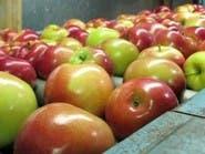 هذه أفضل طريقة لغسل التفاح قبل تناوله
