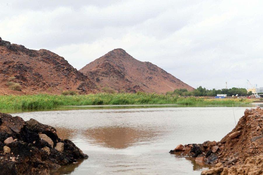 Saudi Medina nature rainfall 6 (Supplied)