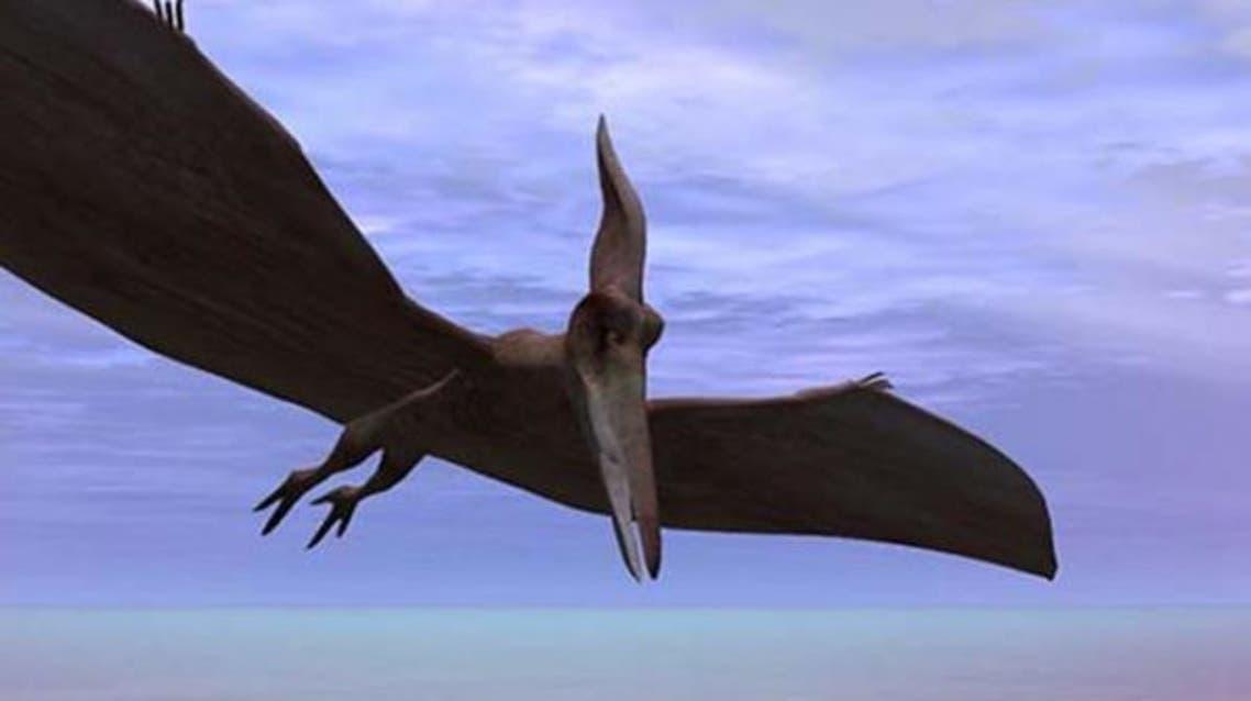 ديناصور طائر