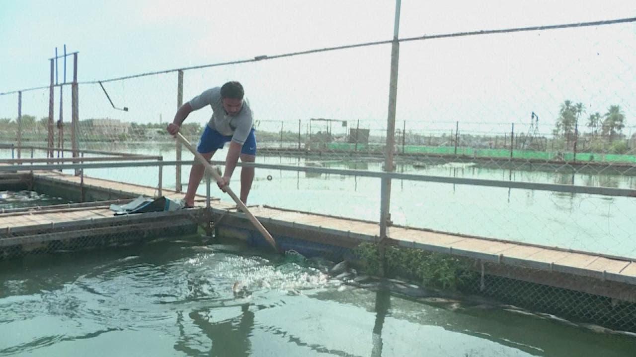أسماك الفرات النافقة تفضح تلوث النهر