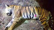 Man-eating tiger shot dead in India after massive hunt