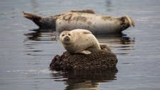 Close call: UK fisherman saved from aggressive seals