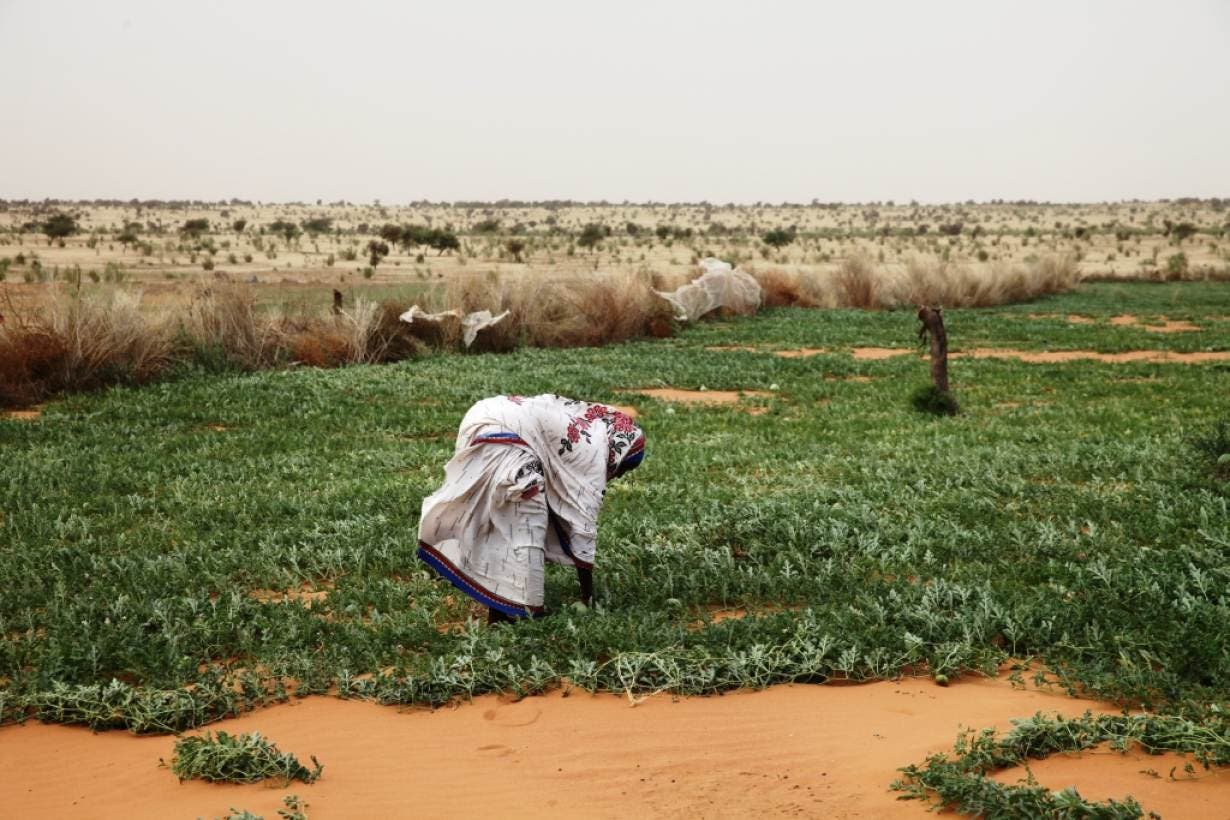 A woman works in a melon patch in the commune of Dar El Barka, Mauritania, October 20, 2018. (Thomson Reuters Foundation/Nellie Peyton)