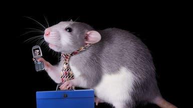 إنذار للبشر.. إشعاع الهاتف أحدث سرطانا لدى الفئران
