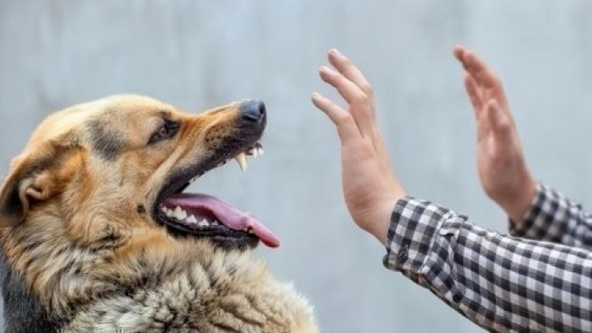 داء الكلب